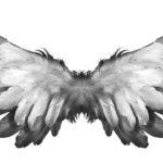 Чому Бог не дав людині крил?