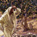 Нехай повік не буде з тебе плоду… (проклята смоківниця)
