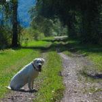 Подорож із лабрадором Мані