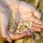 Бог чекає, щоби ми розпочали сіяти зерно