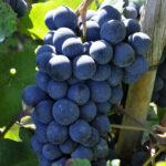 Проповідь на притчу про злих виноградарів